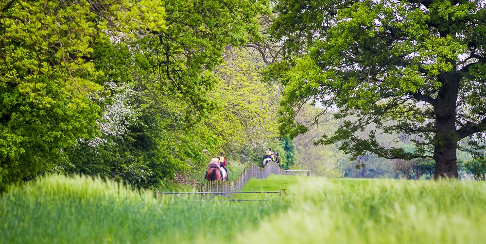 Marimages photography EGB equestrian horse event pleasure ride at Brough Park
